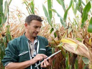 [AgTech] Le Big Data, une réponse à la crise agricole?